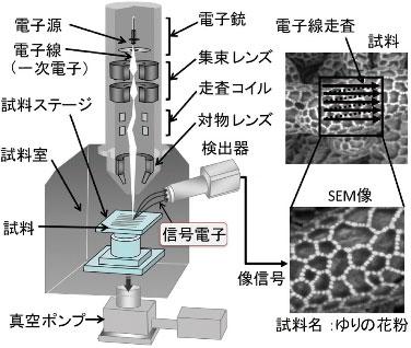 図2 SEM の構造と像形成原理