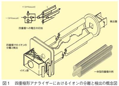四重極型アナライザーにおけるイオン分離と検出の概念図