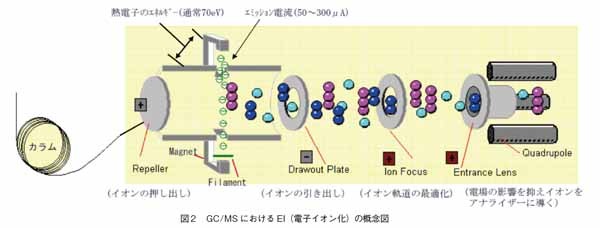 GC/MSにおけるEI(電子イオン化)の概念図