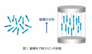 磁場中での核スピンの状態