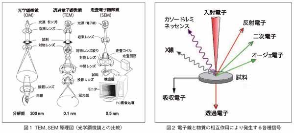 TEM、SEM原理図(光学顕微鏡との比較)と電子線と物質の相互作用により発生する各種信号