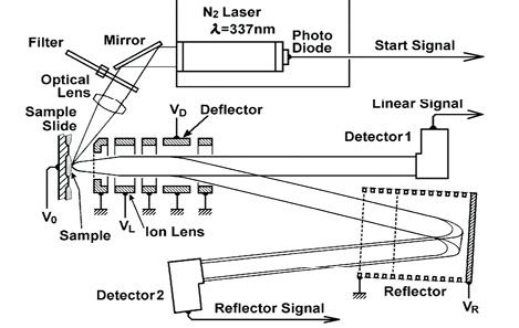 図2 市販のMALDI-T0F-MS の構成図度